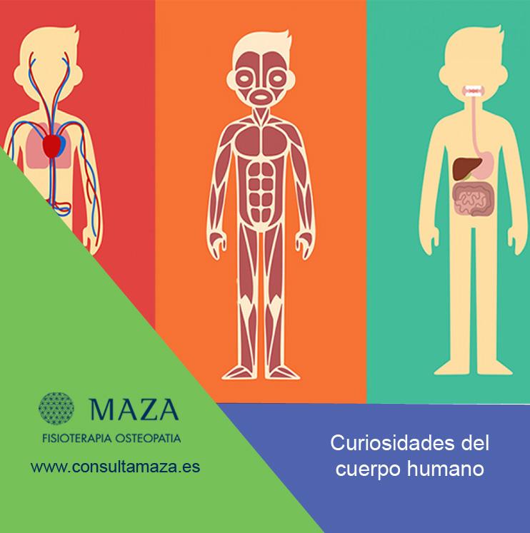 curiosidades-cuerpo-humano.jpg